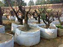 美植袋可以节省水份又可以防止养料的流失
