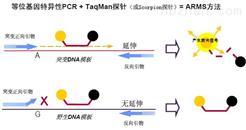 萊氏無膽甾原體PCR檢測試劑盒