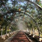园林喷雾景观除尘设备