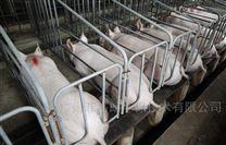 山东养猪场全自动车辆消毒通道设备厂家
