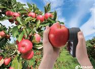日本爱拓苹果糖度计PAL-HIKARi 5