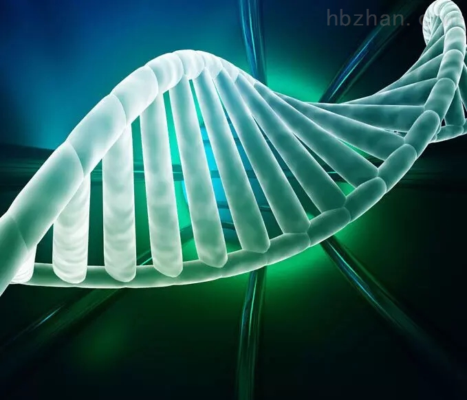 甲基化检测实验