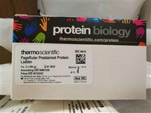 26616 26617Thermo预染蛋白Marker10-180KD 26616 26617