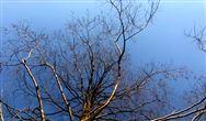 河南省生態環境機構監測監察執法垂直管理制度改革實施方案