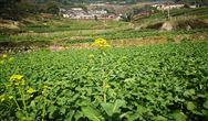 确定3大基本指标 农村生活污水处理标准再细化