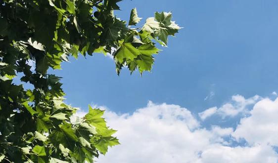 生態環境部公布2019年7月中下旬全國空氣質量預報會商結果