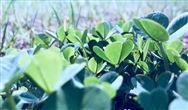 """2019年中国土壤修复行业市场现状及发展趋势分析 """"互联网 """"推动信息化智能化发展"""