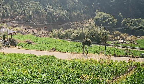 贵州:农村产业值攀升背后 绿色变革开启生态经济新选择