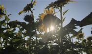 政策摇摆 农村户用生物质清洁取暖如何破局?