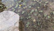 双重关卡 1290亿市场空间 这场农村污水处理盛宴的背后