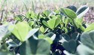 浙江、吉林两省环保产业协会签订战略合作协议