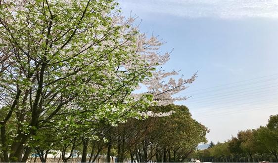 《四川省环境空气质量激励约束考核办法(修订)》发布实施