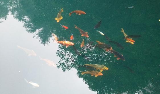 北控水务联合体入围山东鱼台县原水生态净化项目