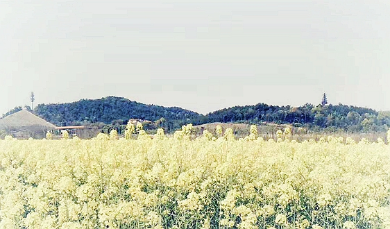 维尔利助力循环农业发展,有效治理城乡有机废弃物污染问题