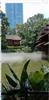 百色铜鼓公园景观人造雾喷雾系统